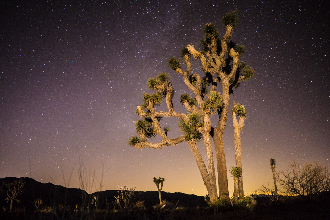 Sony a6000, Joshua Tree National Park, 20s, f/2.8, ISO 3200