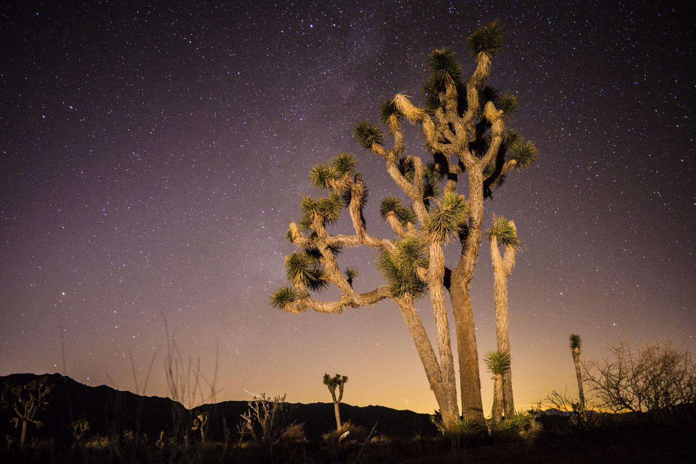 Sony a6000, Joshua Tree National Park, 20s, f/2.8, ISO 3200