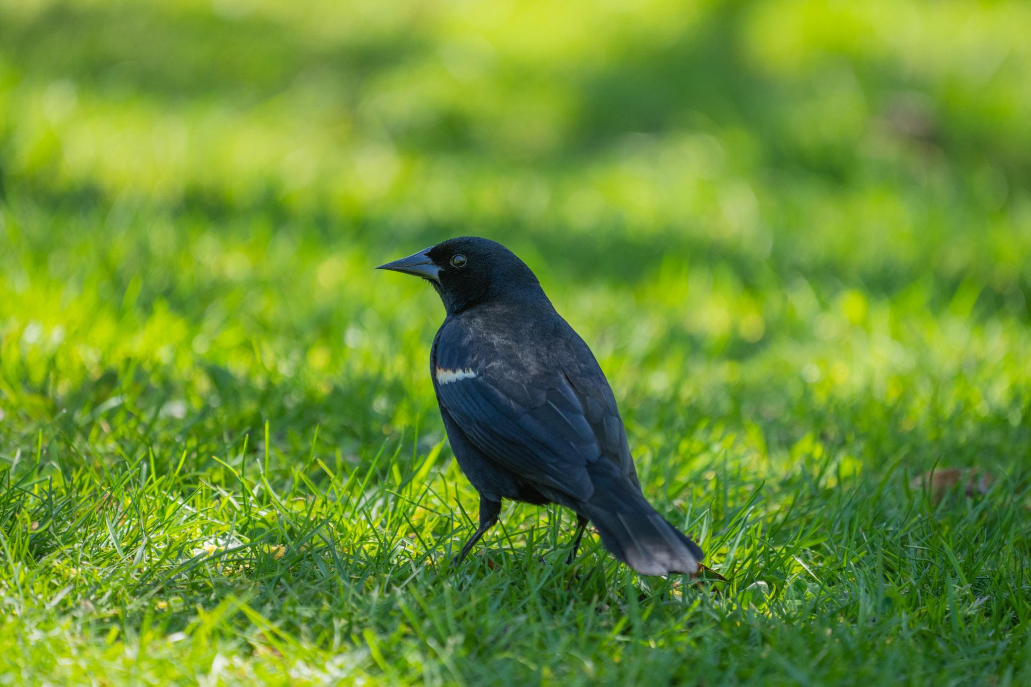 Sony a1 Bird Eye AF